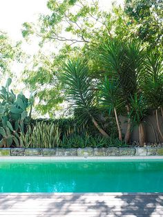 Pool with Yucca hedge Succulent Landscaping, Backyard Pool Landscaping, Landscaping Plants, Pool Plants, Tropical Landscaping, Landscaping Ideas, Backyard Ideas, Landscape Design, Garden Design