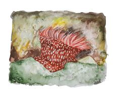 Rock On by MonsterMermaids on Etsy Various Artists, Art Forms, How To Introduce Yourself, Art Gallery, Etsy Shop, Watercolor, Rock, Colouring, Drawings