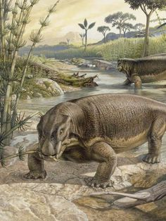 Strange animals of Life Before Dinosaurs, Lystrosaurus from the Permian Period