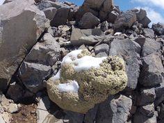 Soft moss on hard rock, Roberts Ridge, Nelson Lakes National Park, NZ