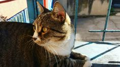 #cat #nice #focused #my📷 Nice, Cats, Photos, Photography, Animals, Gatos, Pictures, Photograph, Animales