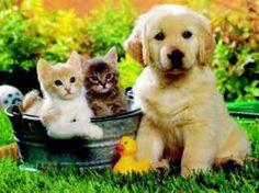 Fent amics !!!