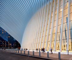 santiago calatrava's soaring oculus WTC in new york