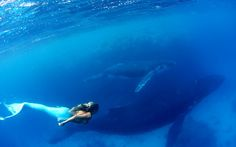 This is a woman named Hanna Fraser, who works as a mermaid-themed model, actress, and activist to raise awareness for marine life and whale hunting. Vava'u Island, Tonga