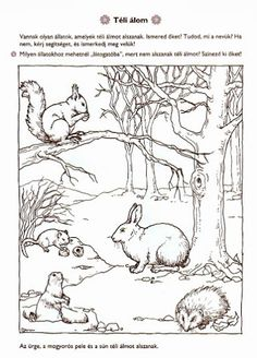 Tág a világ természetismeret játékosan Arctic Animals, Forest Animals, Woodland Animals, Motor Activities, Autumn Activities, Preschool Activities, Animal Projects, Habitats, Coloring Pages