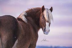 Schwarzwälder Fuchs Wallach im Portrait | Pferd | Bilder | Foto | Fotografie | Fotoshooting | Pferdefotografie | Pferdefotograf | Ideen | Inspiration | Pferdefotos | Horse | Photography | Photo | Pictures