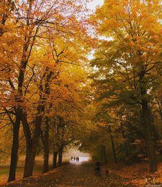 Foggy fall walks on Montreal's Parc du Mont Royal are absolute magic! 🍁 Picture by @ronychidiac. #mtlblog #mtlblognews #montreal #montréal #mtl #quebec #québec #qc #canada #mtlmoments #downtownmontreal #oldmontreal #oldportmtl #fall #fall2016 #autumn #autumn2016 #vancouver #britishcolumbia #toronto #ottawa #ontario #calgary #edmonton #halifax #novascotia