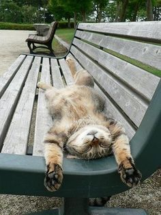 Sunday in the park! That's the life :)  #AdoptDontShop