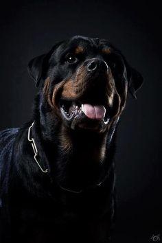 Rottweiler. looks like one of mine