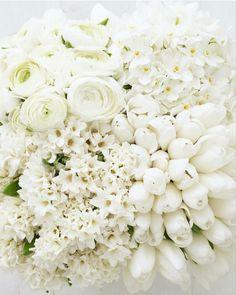 My Flower, White Flowers, Flower Power, Beautiful Flowers, White Roses, White Tulips, Colorful Roses, Cream Flowers, Cactus Flower