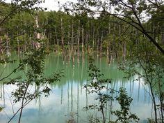 青い池(⌒▽⌒)