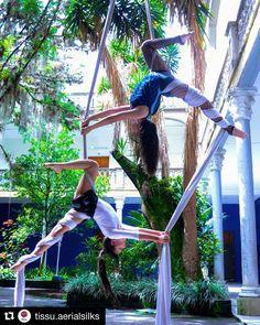 #CirqueDuInsta Repost @tissu.aerialsilks with @get_repost ・・・ Dúo✨ #aerialsilks #telasaereas #aerialfabric #tecidoaereo #tessutiaerei… Aerial Acrobatics, Aerial Dance, Aerial Hoop, Aerial Arts, Aerial Silks, Aerial Gymnastics, Gymnastics Flexibility, Gymnastics Workout, Flexibility Workout
