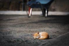rokuthecat:  Kitten by tamasa711 cat,kitten,kitty