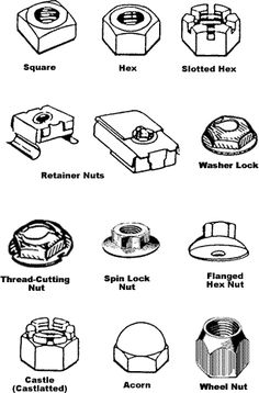 Nut types - Projects to try - Woodworking Shop Layout, Green Woodworking, Japanese Woodworking, Unique Woodworking, Woodworking Hand Tools, Woodworking Projects That Sell, Woodworking Workbench, Woodworking Techniques, Popular Woodworking