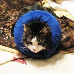 Cat Collars Elastic