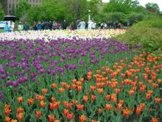 Canadian Tulip Festival - Ottawa, Canada - Travel Moments In Time - travel itineraries, travel guides, travel tips and recommendations Ottawa Canada, O Canada, Canada Travel, Ottawa Ontario, Capital Of Canada, Beautiful Places To Live, Tulip Festival, Photo Story, Time Travel