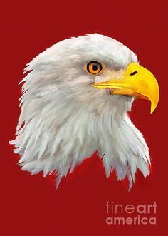 http://fineartamerica.com/featured/bald-eagle-painting-bob-and-nadine-johnston.html