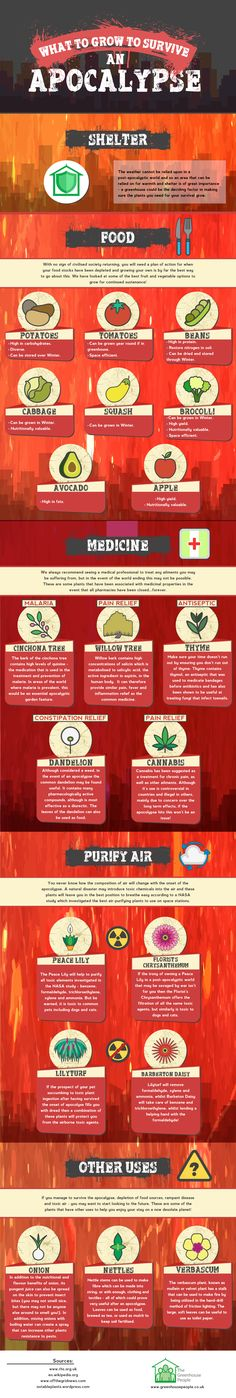 What to Grow to Survive an Apocalypse #Infographic #Gardening