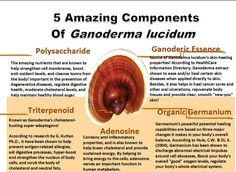 5 Amazing Components Of Ganoderma Lucidum. Benefits Of Ganoderma. Ganoderma Lucidum // Benefits Of Reishi Mushroom// Ganoderma Benefits // Coffee // Fungi // Weight Loss // Immune System // Fitness // How To Lose Weight Fungi, Cell Membrane, Coffee Health Benefits, New People, Drinking Tea, Herbalism, The Cure, Stuffed Mushrooms, Remedies