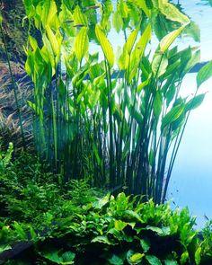 10 Tips on Designing a Freshwater Nature Aquarium Planted Aquarium, Aquarium Terrarium, Aquarium Pump, Live Aquarium Plants, Nature Aquarium, Aquascaping, Freshwater Aquarium Plants, Tropical Fish Aquarium, Beautiful Tropical Fish