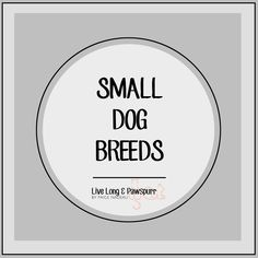 Home - Live Long and Pawspurr Small Dog Breeds, Small Breed, Small Dogs, Daschund, Live Long, Little Dogs, Breeds Of Small Dogs, Pug Dogs, Puppys