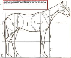 Horse proportion diagram for drawing horses Horse Tail, Horse Head, Drawing Lessons, Drawing Techniques, Horse Drawings, Animal Drawings, Animal Sketches, Art Sketches, Horse Anatomy