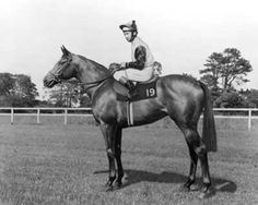 Roberto - 1969 Thoroughbred Stallion. The Sport Horse Show and Breed Database