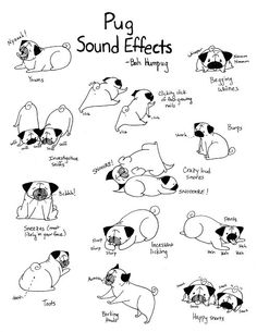 Pugs an the noises they make Lolz <3 adorable