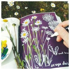 Love the meadow effect Oxeye daisies give to the garden. They really blend the…