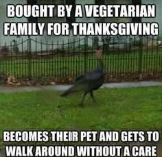 20 Happy Thanksgiving Memes To Help You Celebrate
