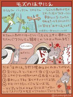 ぬまがさ @numagasa 10月6日 そろそろ秋も本気出してきそうなので、秋のハンター「モズ」の図解を描きました。近所でも「高鳴き」を聞けたり「はやにえ」を目撃できたり、モズ好きには嬉しい季節がやってきますね。「はやにえって何だろう?」と好奇心を抱いた人は画像検索する前にこの図解で予習しといた方がいいかもしれません。 Animals And Pets, Funny Animals, Kemono Friends, Animal Facts, Manga Drawing, Animal Drawings, Mammals, Animal Pictures, Anime Art