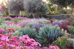 Gardening Ideas 11 Gorgeous Drought-Friendly Landscapes via - See the 11 drought-friendly landscapes are so simple to implement. Being water-conscious has never looked so good. Australian Native Garden, Australian Garden Design, Drought Tolerant Landscape, Drought Resistant Plants, Dry Garden, Garden Water, Gravel Garden, Blue Garden, Xeriscaping