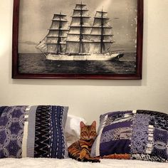 Pippa the Toyger Toyger Cat, Neko, Tapestry, Photo And Video, Cats, Pictures, Painting, Tigers, Animals