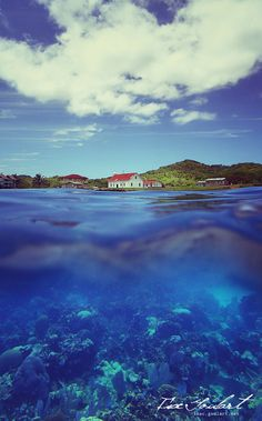 Roatan, Honduras. On my must visit places, has the 2nd largest barrier reef in the world