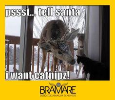 Funny Cats! Gatinhos divertidos :)