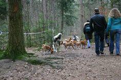 Heerlijk wandelen met de honden in Het Panbos.