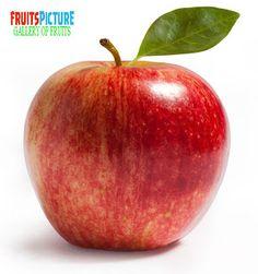 Name  : Apple  Binomial name : Malus domestica  Kingdom    : Plantae  Division...