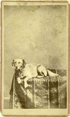 The Fido that popularized the name. Extremely rare carte de visite of Abraham Lincoln's dog, Fido.