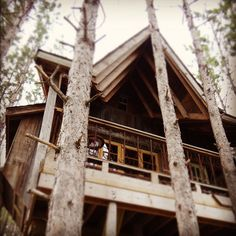Life gets even better in a treehouse!