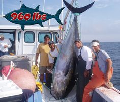 Welcome to Sea Run Tuna Charters. Ewen Clark owner/captain at Prince Edward Island's Sea Run Tuna Charters would like to invite you for a thrill of a lifetime, Giant Bluefin Tuna fishing adventure aboard Pura Vida. Tuna Fishing, Fishing Adventure, Sport Fishing, Big Game, Hobbies