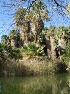 Coachella Valley Preserve - Palm Springs, CA