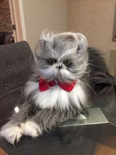 """Atchoum may look like something out of the Jim Henson Workshop, but he's no Muppet. He's a cat with a condition called hypertrichosis, also known as """"werewolf syndrome."""" So far, he's the only known cat in the world to have the condition."""