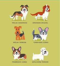 """""""Los perros del mundo""""   Perros galeses"""