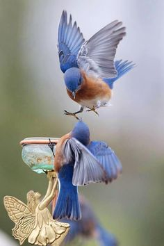 Blue birds #More and more prospective buyers are now viewing property on the internet, and many will make their inspection shortlist based upon what they see there. Progressively more sellers are now realising the nature #birds #flight #blue