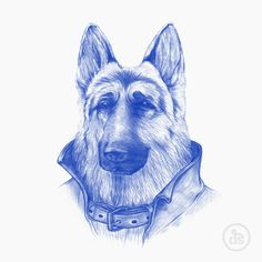 Popped Collar - by David Schwen Man Illustration, Creative Illustration, Popped Collar, Sketch Painting, Animal Heads, Weird And Wonderful, Dog Photography, Stop Motion, Dog Art