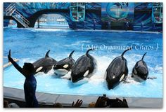 My favorite place to visit of all time...Sea World Orlando