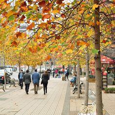 Ossantiaguinos adoram comparar a cidade com grandesmetrópoles mundias e costumam chamar o bairro Las Condes de Sanhatan um mix entre Santiago eManhatantirem suas próprias conclusões... - - -  #bistro_kilometro0 #Km0 #Km0Bistro #bistrokm0 #Sanhatan#LasCondes#ComerDormirViajar #Santiagoadicto #Chilegram #turistikchile #Chile #MeGusta #SantiagoNoPara #santiago #instachile #restaurante #vistalinda #Manhatan#ferias #gourmet #chile #travelblog #travelbloggers #travelblogging #travelblogger…