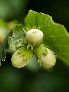 Serenity in the Garden: The Sublime Color of Hazelnut