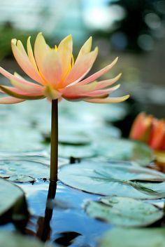.~Beautiful Colour~.