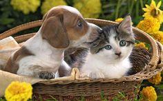 Nette Welpen und Kätzchen im Korb Hintergrundbilder Vorschau